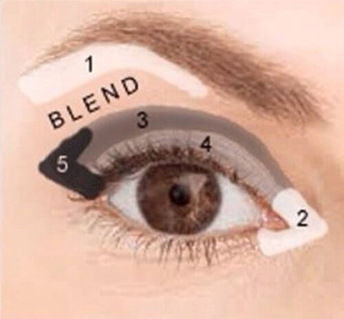 Visual guide on where to apply eyeshadow to define your crease and outer V.